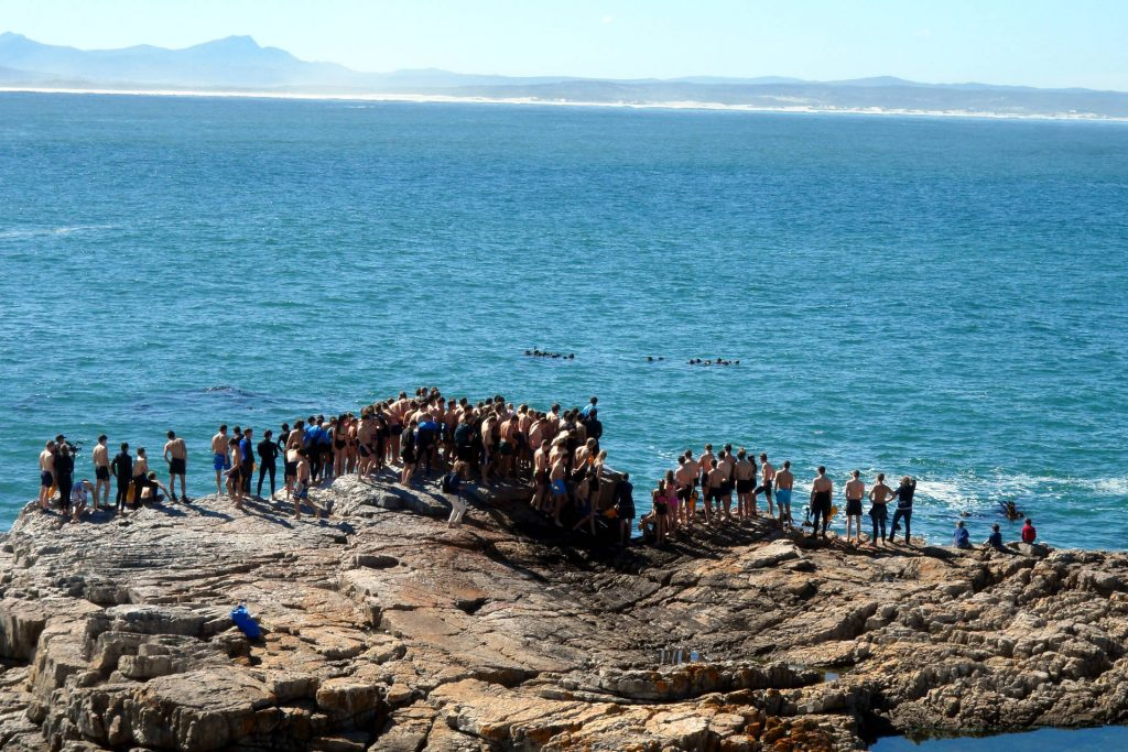 Hermanus - Whale Festival - course de natation