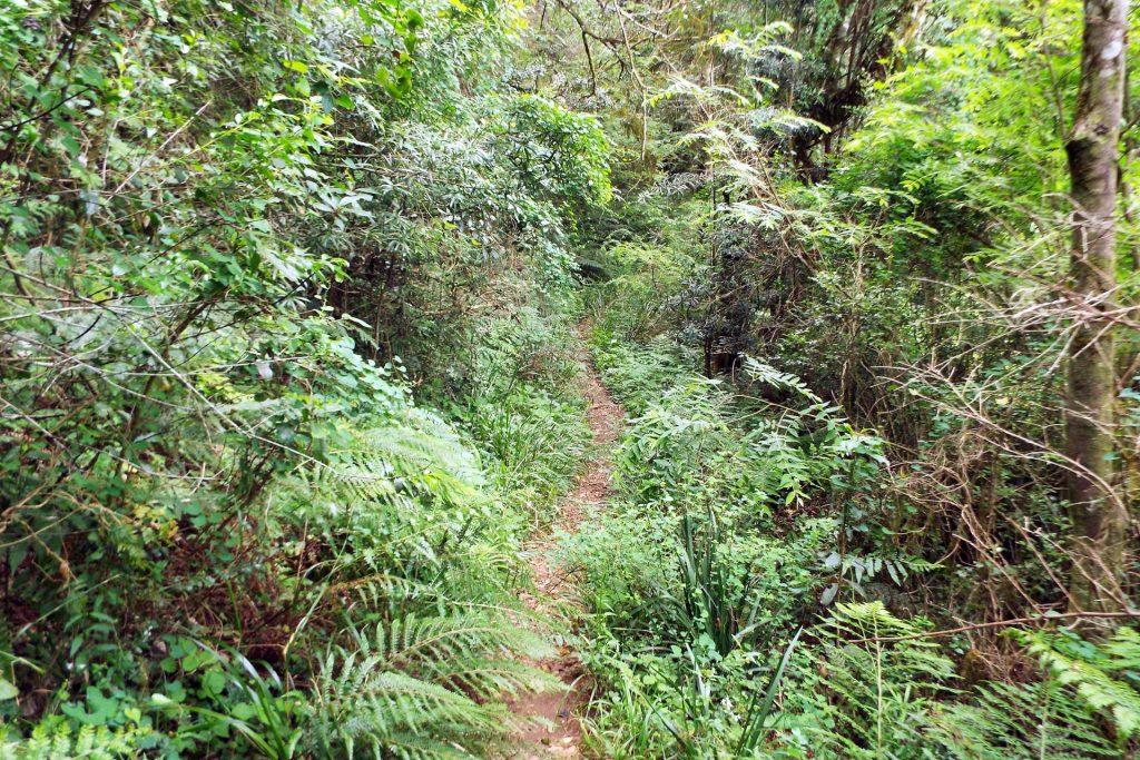 Afrique du Sud - Hogsback - la forêt