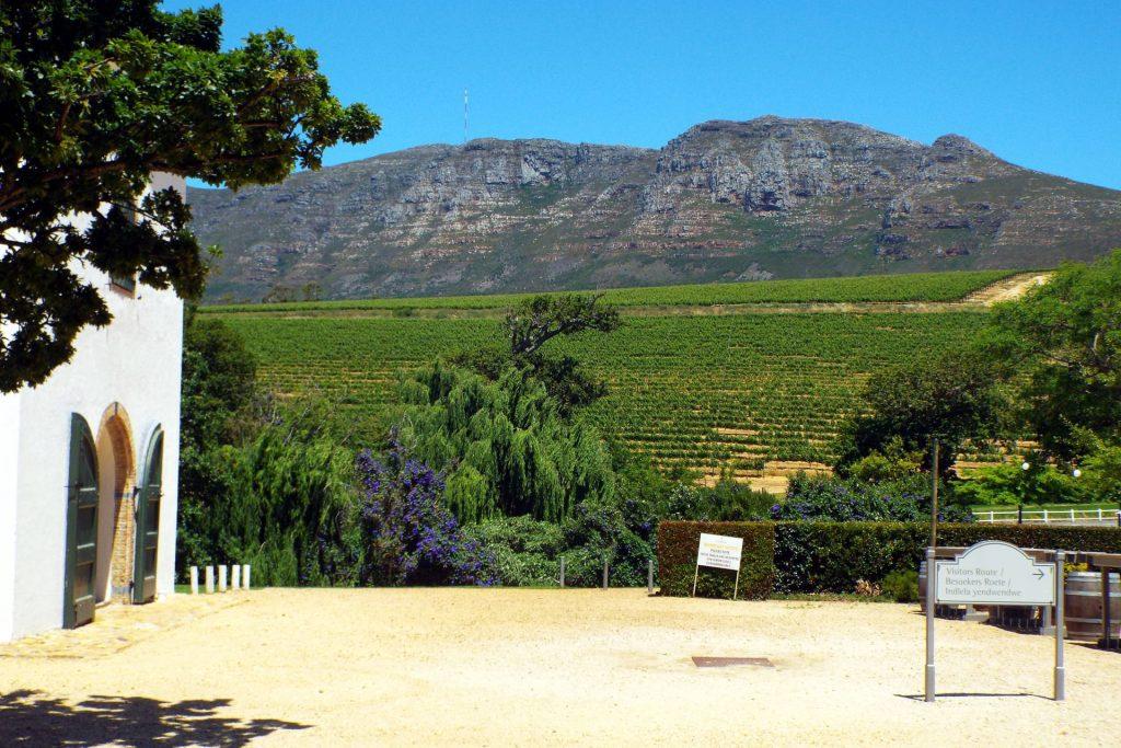 Afrique du Sud - Cape Town - Groot Constantia