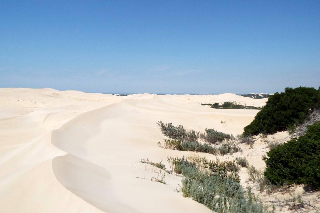 Afrique du Sud - Port Elizabeth - dunes