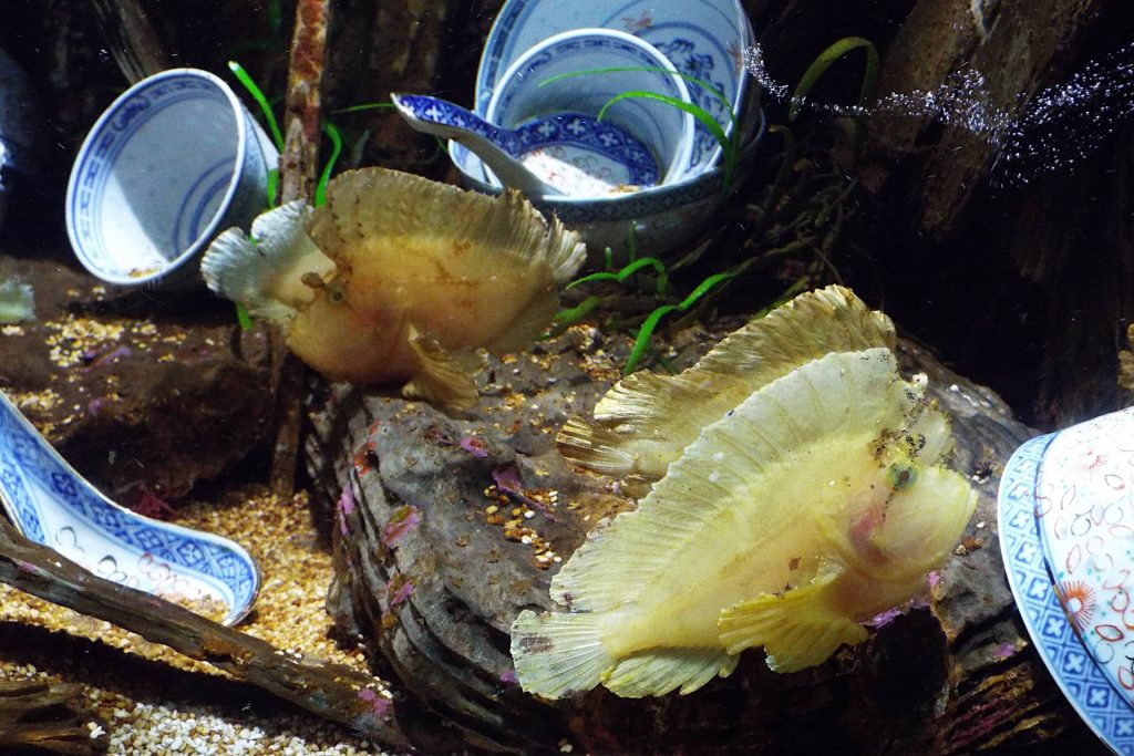 Afrique du Sud - Durban - poissons dans l'aquarium uShaka