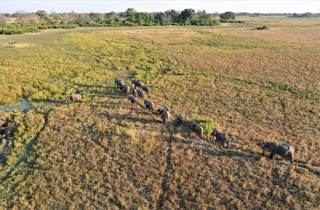 Zambie - éléphants