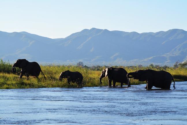 Zimbabwe - éléphants